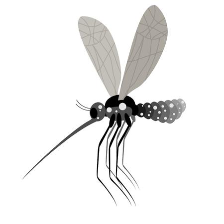infective: Mosquito white background. Zika virus mosquito. Infective Mosquito. Dangerous mosquito carrier of virus diseases. Zika virus.