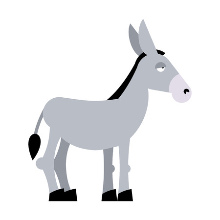 mule: Donkey on white background. Donkey isolated. Cartoon donkey. domestic stubborn  Mule