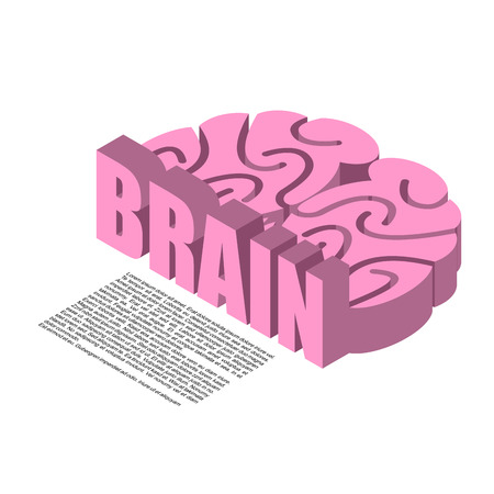 midbrain: Brain structure of infographics. Brains headache human cortex