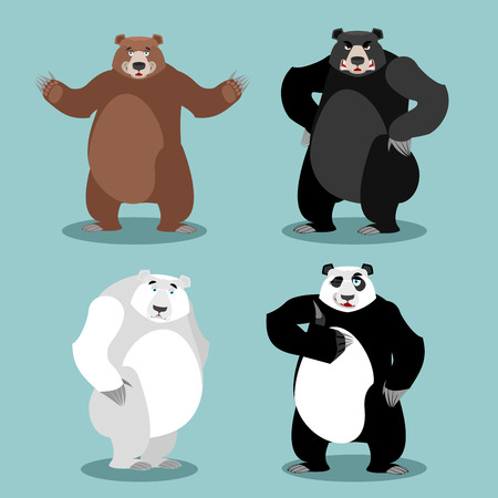 spectacled: bears set Breed. Grizzly and panda. American black bear baribal. Polar. Different poses wild animal. Carnivorous animals