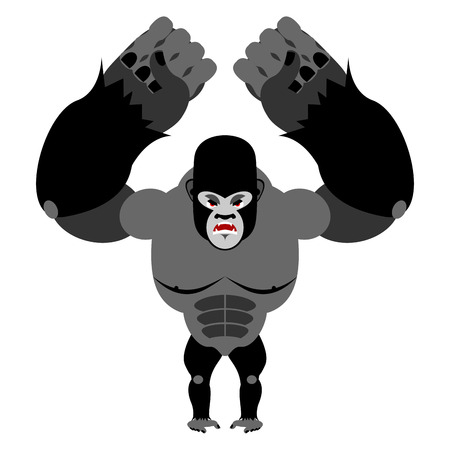 wrathful: Angry gorilla on its hind legs. Aggressive Monkey on white background. Wild wrathful animal. Large ferocious predator. African strong beast