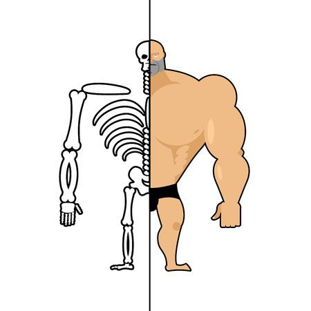 menselijke structuur. Skelet mannen. Anatomie bodybuilder. bouw van atleet. Botten en schedel. Atleet interne organen. Menselijk bottenstelsel
