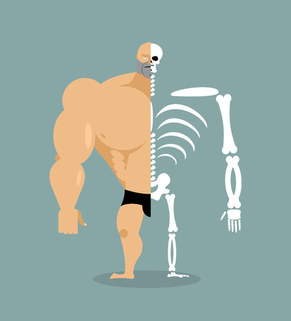 human structure. Skeleton men. construction of athlete. Bones and skull. Athlete internal organs. Human bone system. Anatomy bodybuilder. Illustration