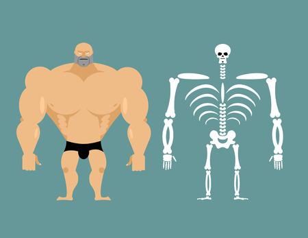 menselijke structuur. Skeleton mannen. bouw van de atleet. Botten en schedel. Atleet interne organen. Menselijk bot-systeem. Anatomie bodybuilder.