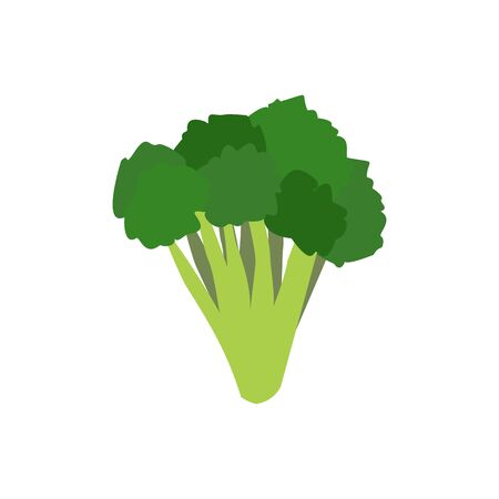 broccoli sprouts: Broccoli isolated. Greens on white background. Broccoli sprouts. Useful green vegetable Illustration