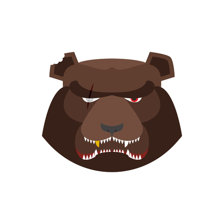 angry bear: Angry bear in green beret. Aggressive Grizzly head. Wild animal muzzle isolated. Forest predator Illustration
