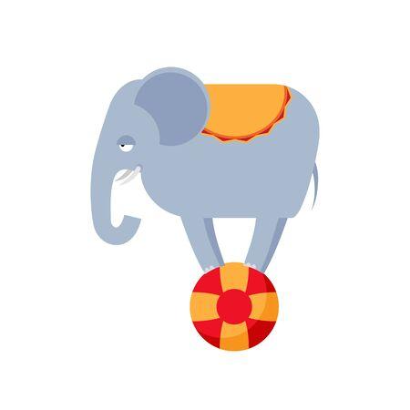 Elephant on ball isolated. Circus animals on white background.