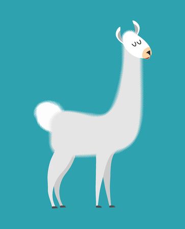 alpaca animal: Lama isolated. Cute alpaca animal. South American mammal
