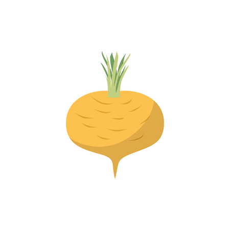 turnip: Turnip isolated. Yellow vegetables on white background. vegetarian Food