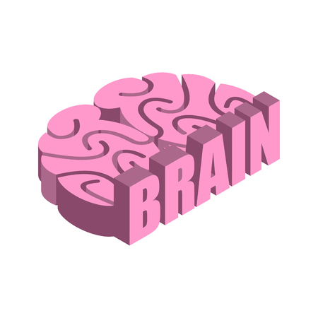 Brain isolated. Human brains on white background Illustration