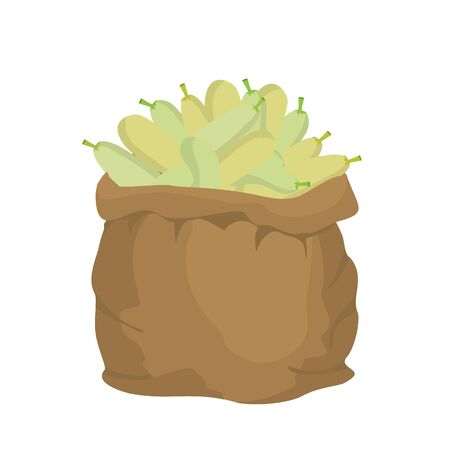coarse: Zucchini Burlap bag. sack of vegetables. big crop on farm. sackful Zucchini