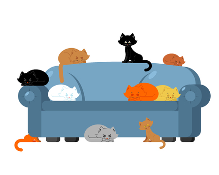 Many Cats on couch. kittens on sofa. Furniture cat lady. Illustration