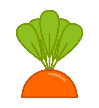 Carrot grow isolated, vegetable on garden bed Illustration