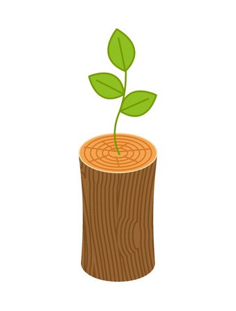 Sprout from logs, new life concept.