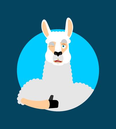 Lama Alpaca thumbs up and winks emoji. Animal happy emoji. Vector illustration Illustration