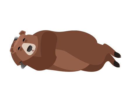 Bear sleeping isolated. Grizzly asleep emotions. Wild beast dormant. Vector illustration Illustration