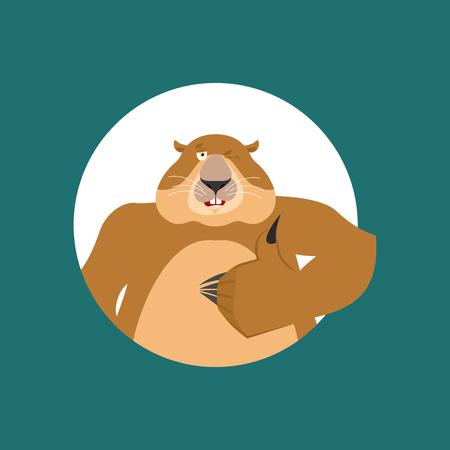 Groundhog thumbs up and winks. Woodchuck happy emoji. Groundhog day Vector illustration