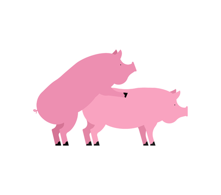 Pig sex. Piggy intercourse. Pigs isolated. Farm Animal reproduction Vectores