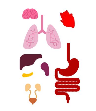 Human anatomy organs Internal set. Systems of man body and organs.