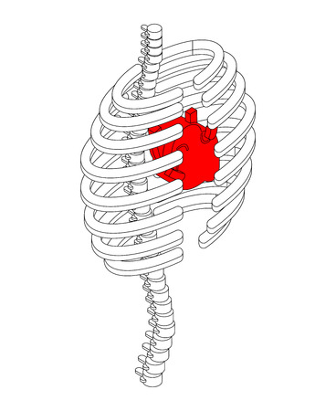 Rib cage and heart isometric style. Ribs anatomy body 3D. Internal organs