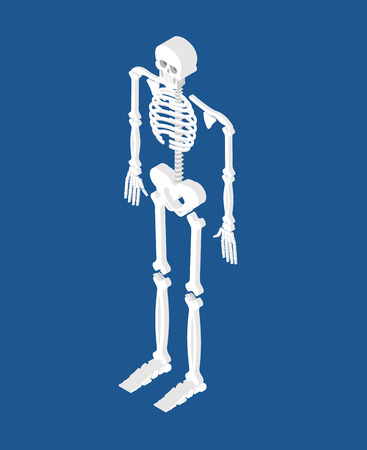Skeleton isometric isolated. 3D Skull and Bones. Pelvic bone and ribs. Spine and vertebrae. Human bone system