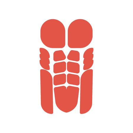 Sistema de músculos del torso sistema del cuerpo humano. Músculo pectoral y prensa Corpus man Anatomía muscular Ilustración de vector