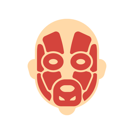 Kopfmuskelsystem des menschlichen Körpers. Gesichtsmuskuläre AnatomieÂ