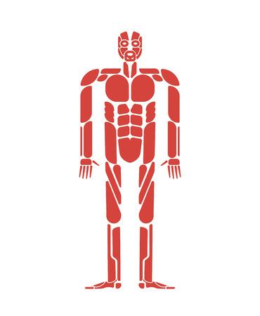 Sistema de músculos sistema del cuerpo humano. Anatomía muscular