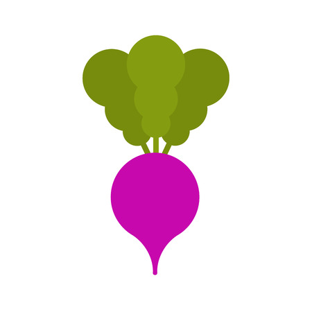 Radish isolated cartoon style. Vegetable Vector Illustration