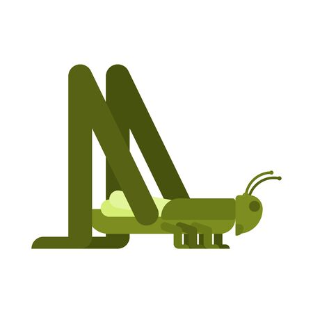 Grasshopper isolated. green locust Insect vector illustration