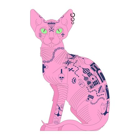 Sphynx cat with tattoo. Pet bully and criminal. Bad boy animal