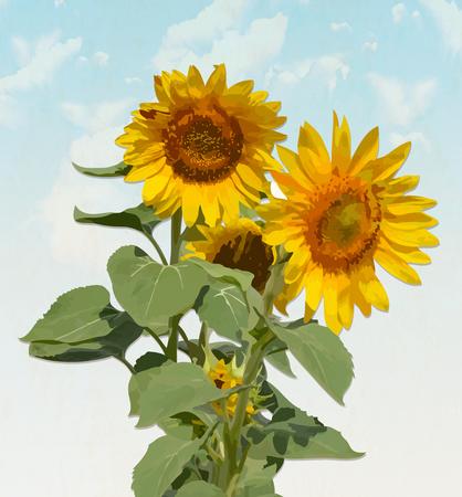 Sunflower on  sky background