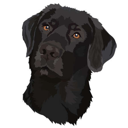 Black labrador. Vector illustration.Portrait of a dog.