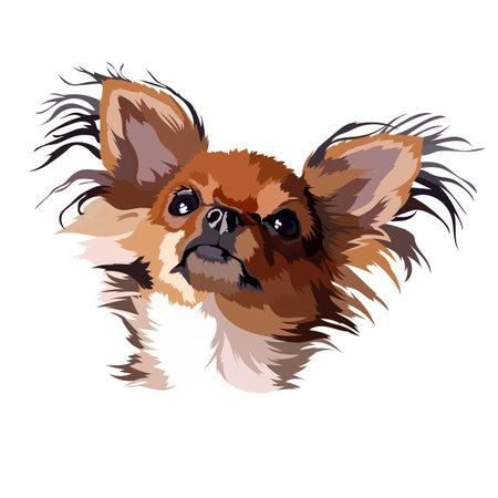 Chihuahua dog longhair vector illustration