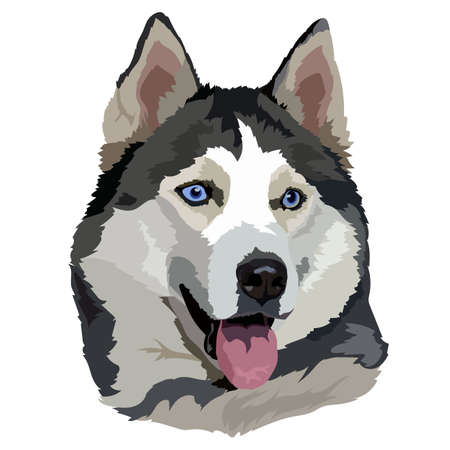 face of a blue-eyed dog husky breed vector illustration Ilustración de vector