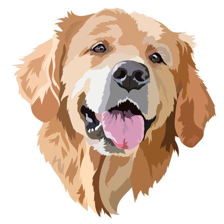 Golden Labrador Retriever Head Vector Illustration
