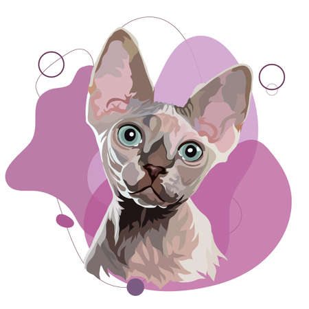 Sphynx cat vector illustration. Head portrait on a colored background Vetores