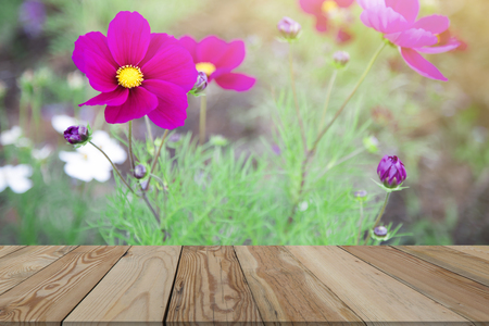 Pink Cosmos with warm sunshine after blurring with a wooden space.