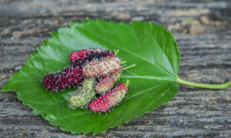 The result is Mulberry placed on green leaves. Stock Photo