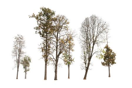 Tree group isolated on white background. Stock Photo
