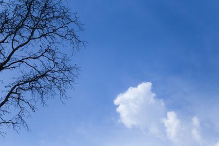 Dry tree with blue sky.
