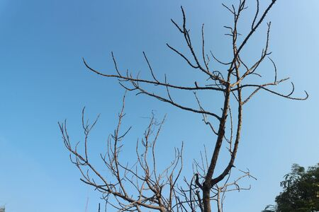 Background Branch of dry tree on the sky