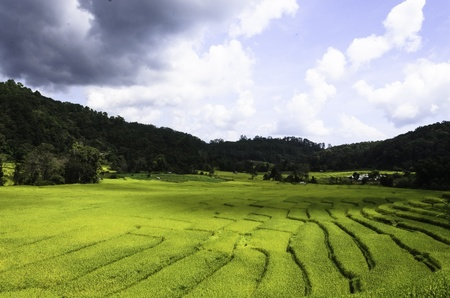 Farmers use rice fields for rice cultivation Stock Photo