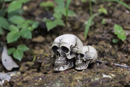 human photography: The skull or skeleton of human photography Stock Photo