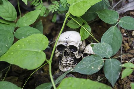 human photography: El cr�neo o esqueleto de fotograf�a humana