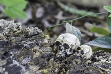 The skull or skeleton of human photography Stock Photo
