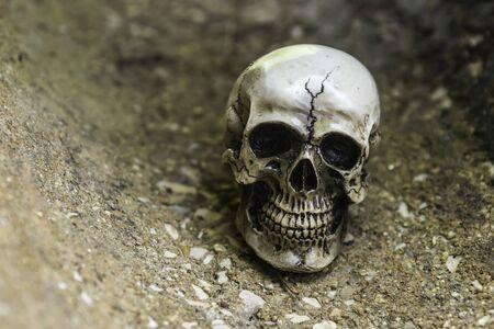human photography: skull or skeleton  human photography Foto de archivo