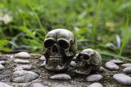 human photography: skull or skeleton of human photography