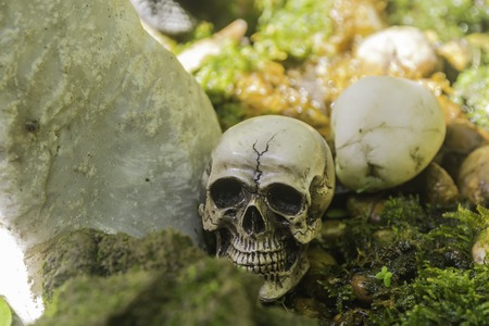 skull or skeleton of human photography