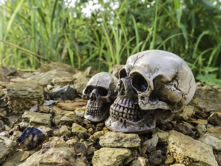 skull or skeleton human photography Stock Photo